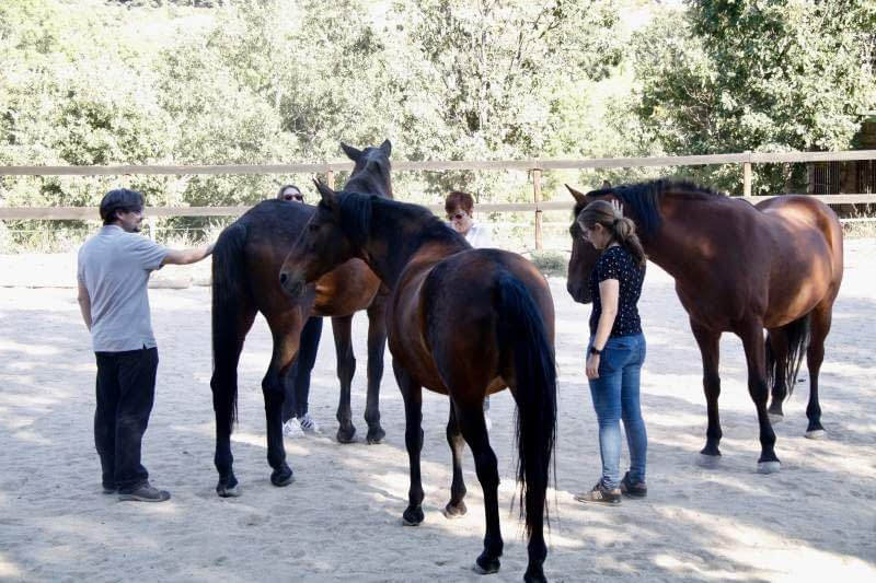 How Coaching with Horses Brings Excellence to Business