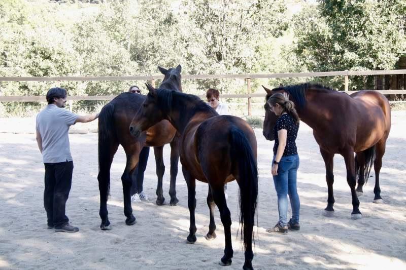 Cómo el coaching con caballos lleva la excelencia a las empresas